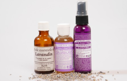 Lavender: much more than just an insect repellant